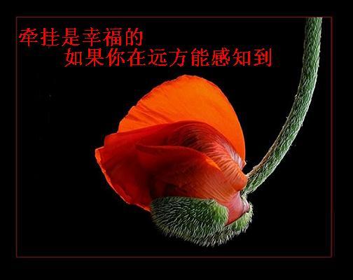 引用 牵挂(图文) - 彼岸桃花 - 彼岸桃花欢迎您