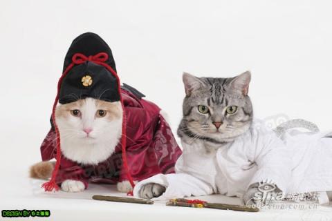 昭白天下--猫鼠?鼠猫? - 雷文 - 雷篆文書