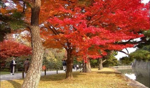 秋色(组图)(一) - 老藤 - tengxuyan 的博客
