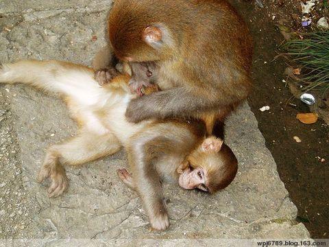 [原创]贵州行之十五岁的喂猴男孩 - 杰然不同 - 杰然不同的博客