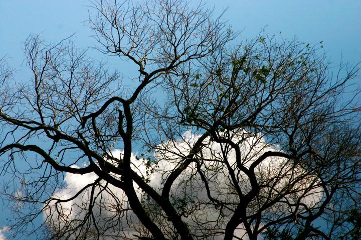 (原创摄影)枯树 - 刘炜大老虎 - liuwei77997的博客