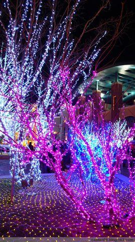 【原创】蓝色港湾狂欢夜 - caidan58 - 陆岩的博客