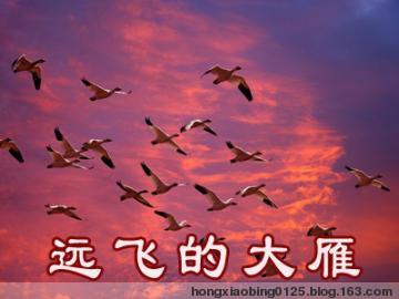 远飞的大雁 - 汤洪高 - 汤洪高个人主页