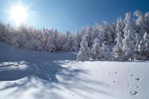 【原创】冬季进行曲…… - 雪之舞 - 雪儿的BLOG