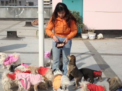 救助站年味儿十足(二) - 广元市流浪动物救助站 - 四川启明小动物保护中心广元救助站的博客