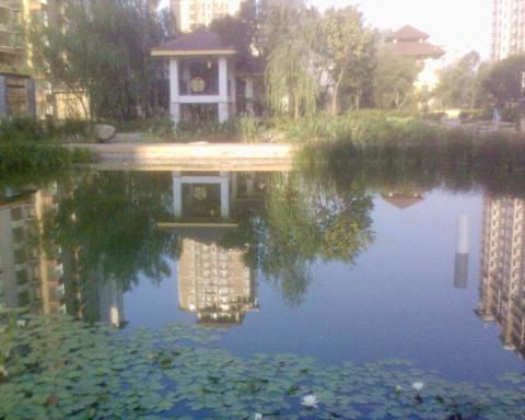 小池秋色 - 肖梅 - 肖梅的博客