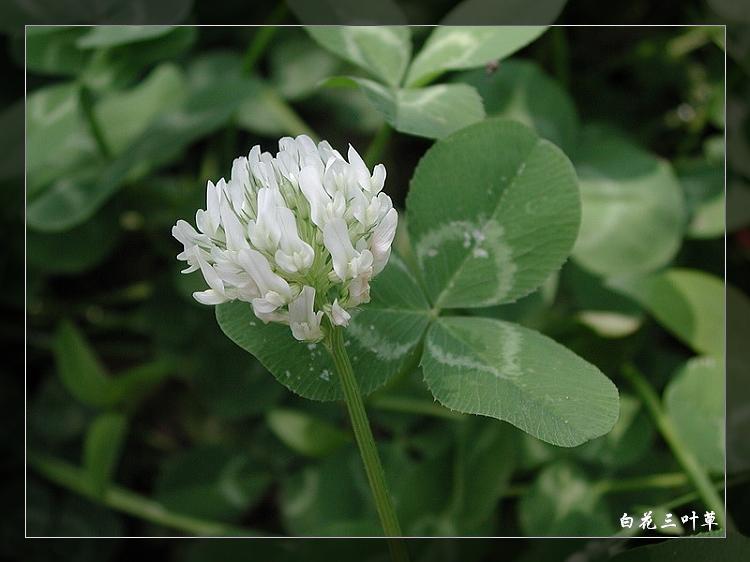 植物图谱3 - 沧海的日志 - 网易博客 - 流通 - 流通博客