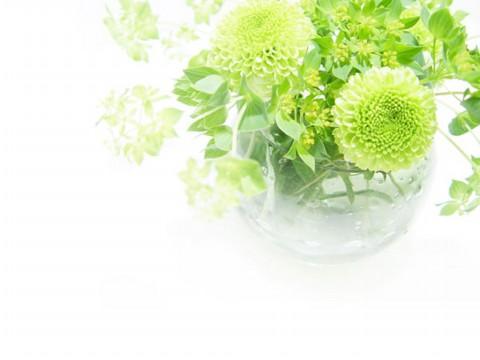 花卉背景素材系列 - 天马行空 - 天马行空的博客