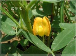 植物精美图谱600种(九) - 香儿的日志 - 网易博客 - 文阁绘画工作室 - yangwenge923 的博客