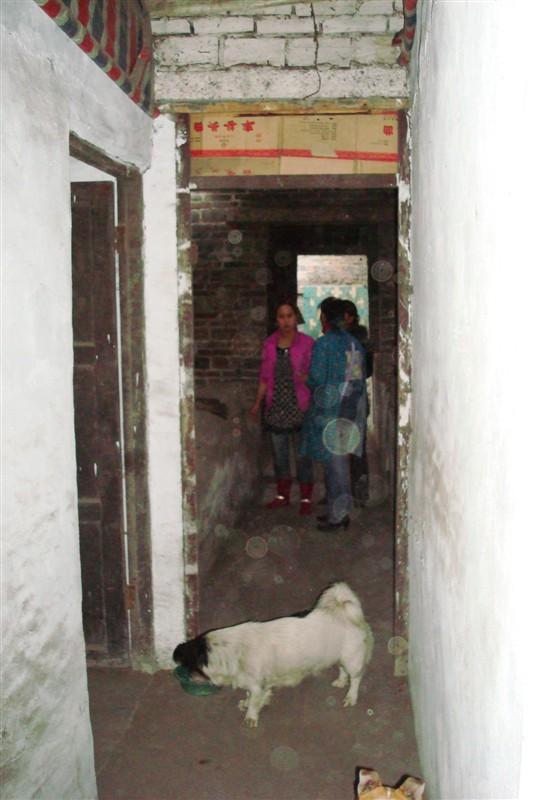 2010.4015在杨家岩社区广元煤矿给那些狗狗免费疫苗 - 广元市博爱动物保护中心 - 广元市博爱动物保护中心