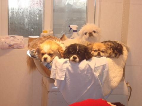 救助站的年味儿十足(一) - 广元市流浪动物救助站 - 四川启明小动物保护中心广元救助站的博客