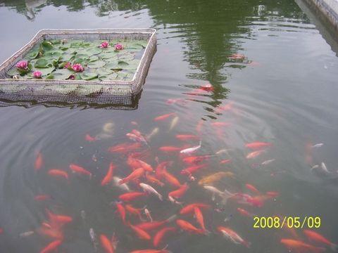 秋冷话知音(疏勒河的红柳) - 疏勒河的红柳 - 疏勒河的红柳
