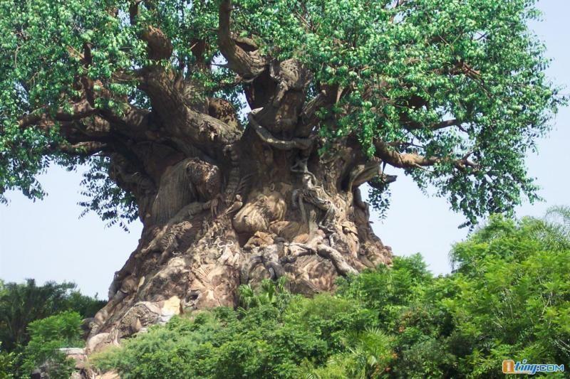 """一棵神奇的大树。转到你空间,很灵的! - 愚人 - 愚人:""""犯我强汉者,虽远必诛!"""""""