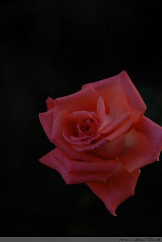 [玫瑰花]引用 - 荷花帅哥 - 荷花帅哥博客