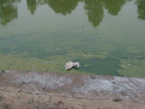 东湖太大,不怕污染 - liuyj999 - 刘元举的博客