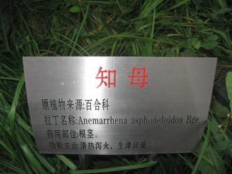 知母 20081026