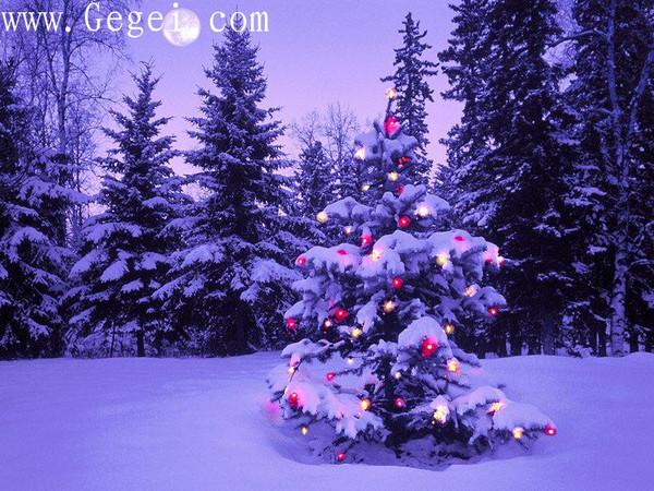 圣诞私语圣诞情语... - 網際飛星 - 璀璨星空旖旎花園gegei.com