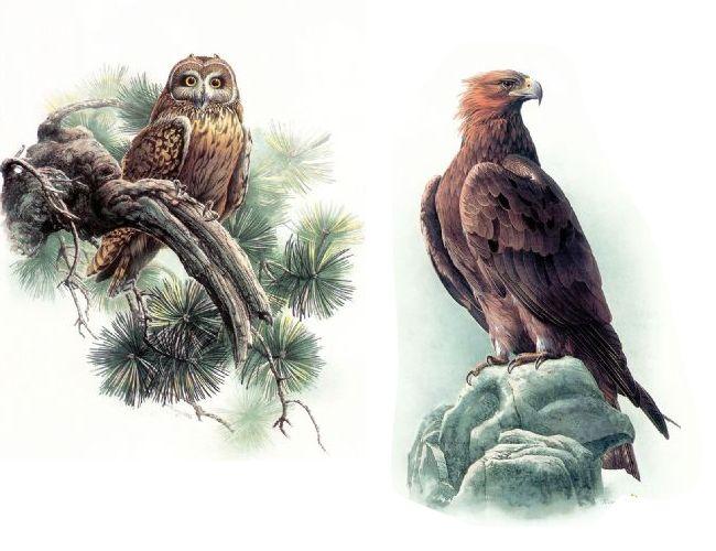 精 品 鸟 图 - 千岛湖奇石 - 千岛湖奇石之家