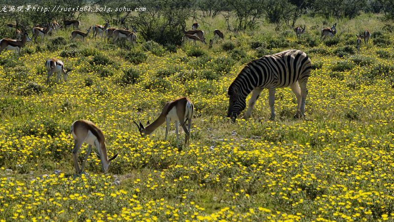 纳米比亚野生动物拍摄散记(三) - 晓月 - 走马观景