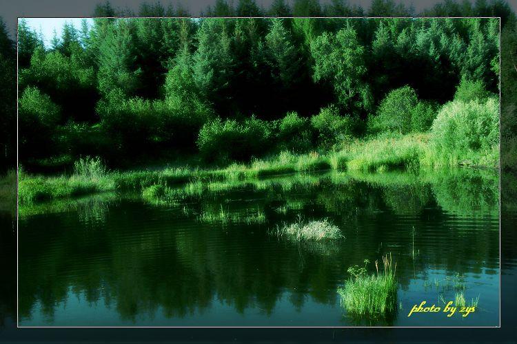 绿荫不减来时路[原] - 自由诗 - 图说天下