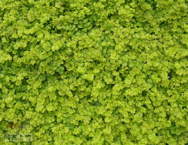 常见园林绿化植物图片 - 福清二中生物组 - 福清二中生物组