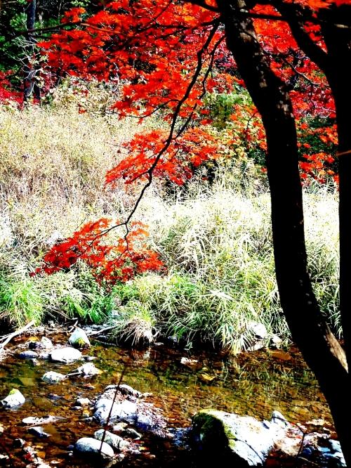 北国之秋(摄影组图) - 十年剑 - 十年剑的博客