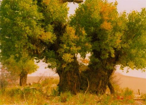 爱.谁知错(疏勒河的红柳原创) - 疏勒河的红柳 - 疏勒河的红柳