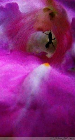 花儿(微距) - 天山雪 - 天山雪莲