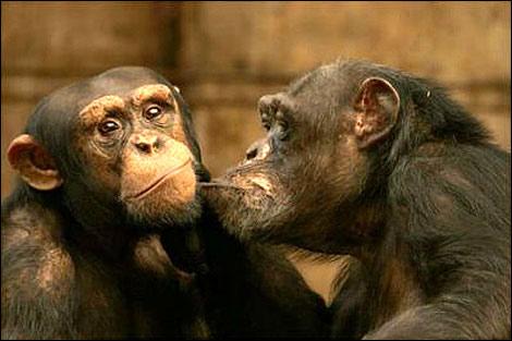 引用  春天:动物们的恋爱时分 - 梅梅 - 梅苑de弹琴玉楼与吟歌仙阁