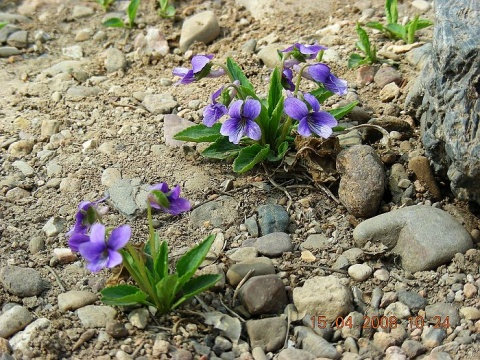 美丽心情  美丽春天 - 人淡如菊 - 人淡如菊的博客