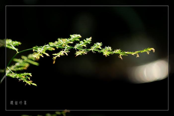 [原创]扫花市——文竹 - 迁徙的鸟 - 迁徙鸟儿的湿地