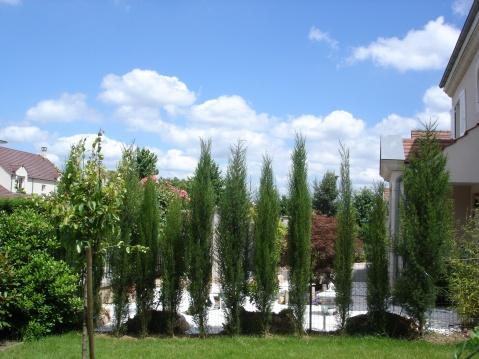 巴黎郊区小镇上的意大利柏树 - pfspfs666.popo - 反三的博客
