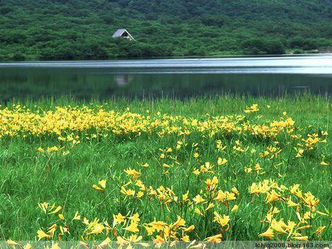 春韵 - lclyq2008 - lclyq2008的博客
