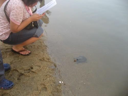 6月6日东莞厚街放生:水鱼、塘虱、生鱼、乌龟 - 阿德 - 深圳放生