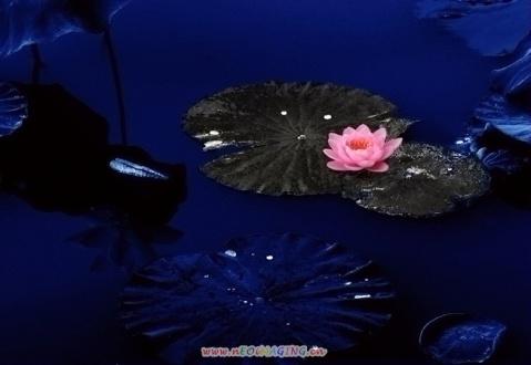 我有一个美丽的梦(原创歌词修订版) - 阿华头 - 阿华头的博客