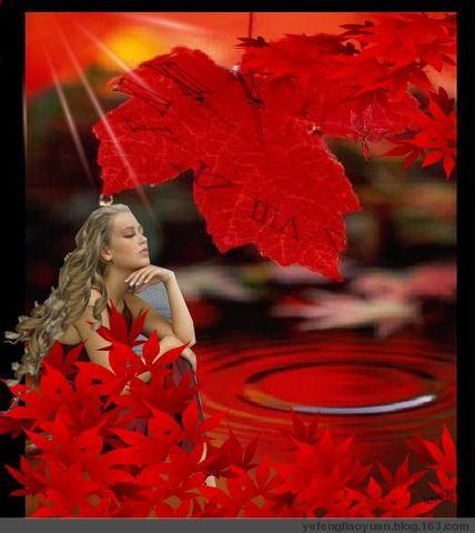 枫叶情 - 红 枫 - 红枫