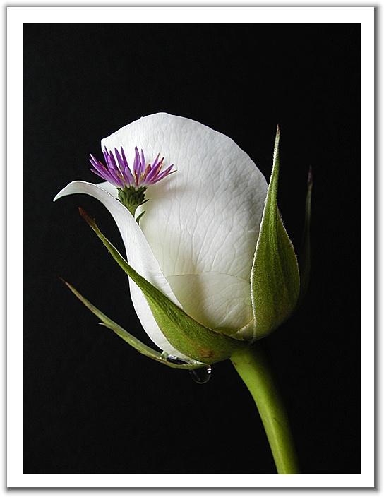 引用 绝美的微距离摄影[组图] - moshuangle - moshuangle的博客