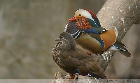 【續二】动感的鳥相册! - jerry - JERRY   BLOG