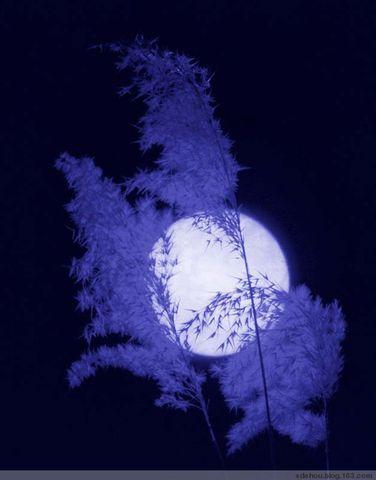 2008年中秋望月 - 卓三 - 卓三的博客