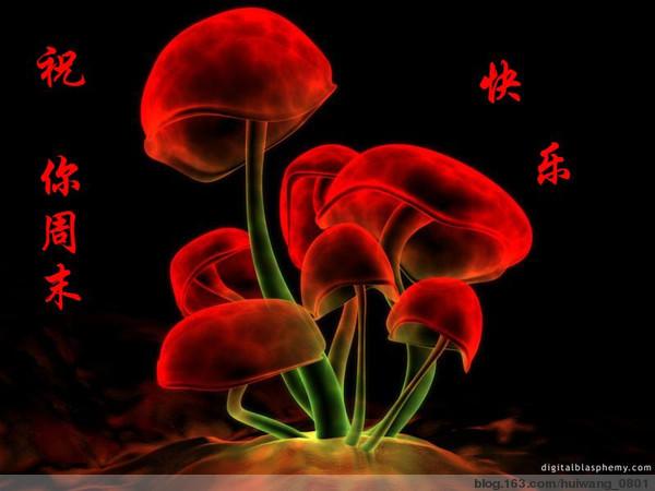 2014年10月28日 - 木兰花 - m13986235944的博客