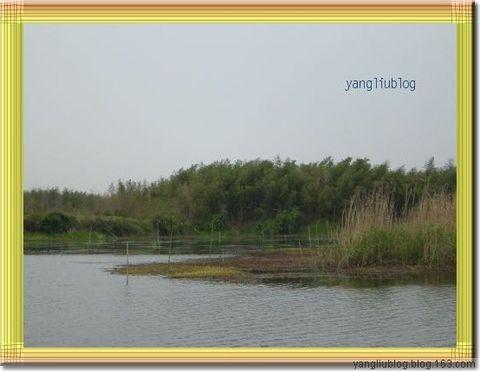 湿地下渚湖的自然风光 - 杨柳 - 杨柳的博客