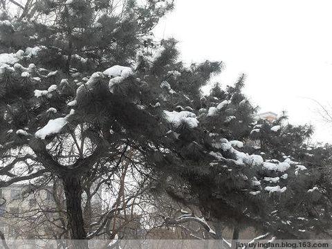 握别冬天,拥抱春天 - 雨的印记 - 人之相悉悉于品,人之相敬敬于德。