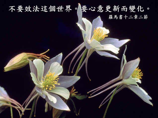 奉 献——把主权交给神(群里) - 北京真道教会 -    北京真道教会博客