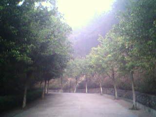 登山快拍:滴水岩森林公园(上) - 阿当 - don.com
