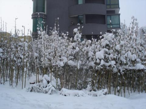 住宅小区雪景 - 阳光月光 - 阳光月光