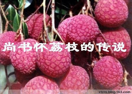 【民间传说】尚书怀荔枝的传说 - 湛汝松 - 新塘拾贝