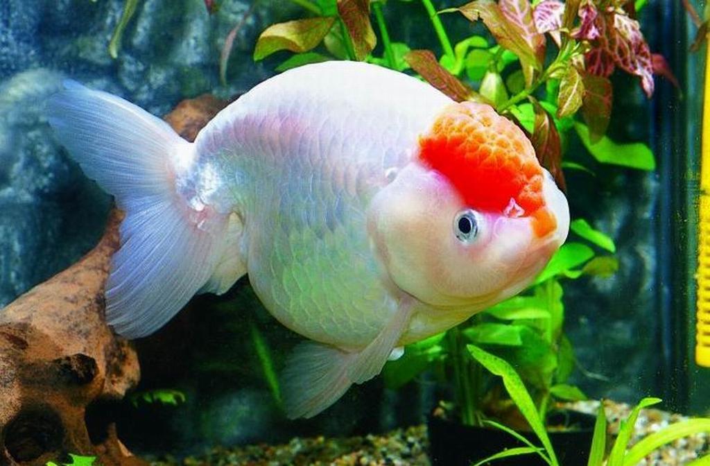 养鱼与风水 - 靓影美体养生堂 - 康复美体养生馆的博客
