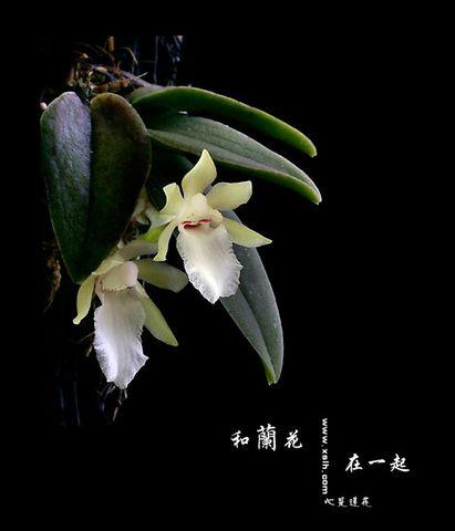 兰花心事【组图】 - 蝴蝶 - 一日一生