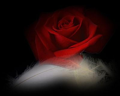 闪闪的玫瑰花素材(转) - 雪花飘使者 - 雪花飘使者的博客