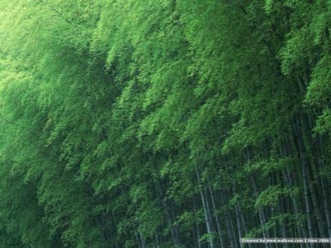 竹林听箫及代码 - 水云天 - 水云天